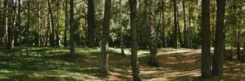 Panorama-Image-Sample-1-650x216