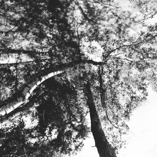 Panorama-Image-Sample-2-650x650